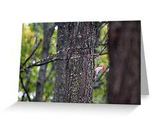 Red-bellied Woodpecker - Melanerpes carolinus Greeting Card