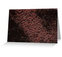 Autumn's red hedge Greeting Card
