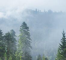 Rolling Fog by Svetlana Sewell