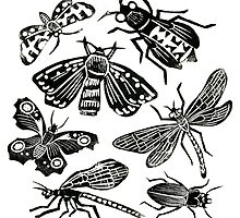 Insect Collection Lino Prints by Hazel Partridge