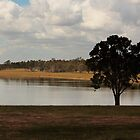 Lone tree at Joh Bjelke-Petersen Dam  by myraj