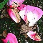 Fallen Rose Petals by Shulie1