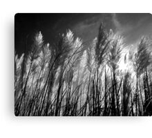 Pampas Flare Canvas Print