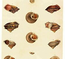 Shells by Vintagee