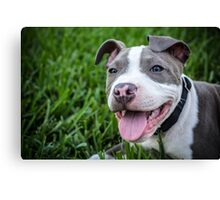 Pit Bull Puppy Smiling Canvas Print