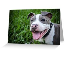 Pit Bull Puppy Smiling Greeting Card