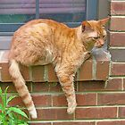 Lazy Day Cat by Vivian Eagleson