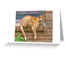 Lazy Day Cat Greeting Card