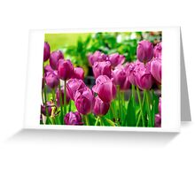 LAVENDER TULIPS BATHED IN SUNLIGHT Greeting Card