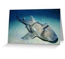 Port Jackson Shark Greeting Card