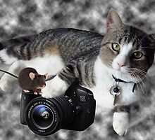 "(CAT) ""SAY CHEESE"" (MOUSE)""DID SOMEONE SAY CHEESE?"" CAT & MOUSE PHOTOGRAPHER - PICTURE & CARD by ╰⊰✿ℒᵒᶹᵉ Bonita✿⊱╮ Lalonde✿⊱╮"