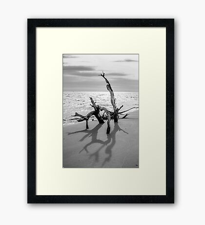 Lowcountry Driftwood Framed Print
