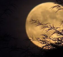 Gold Moon by Adrianna Torres