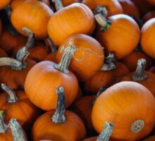 Pumpkins 1 Sticker