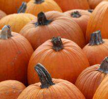 Pumpkins 4 Sticker