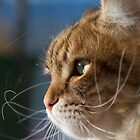 Cat whiskers in the sun by John Janicki