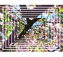 Cherry Blinds Photographic Print