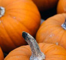 Pumpkins 7 Sticker
