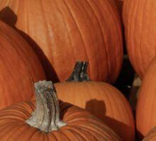 Pumpkins 5 Sticker