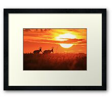 Red Hartebeest - Free and Golden - African Wildlife Framed Print