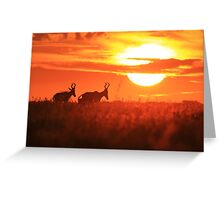 Red Hartebeest - Free and Golden - African Wildlife Greeting Card