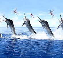 5 Jump Marlin Merge 6 x 10 Dimension by blackmarlinblog