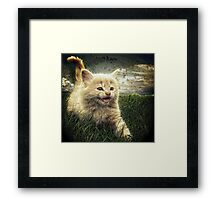 Kitten in the grass Framed Print