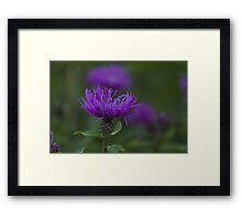 blue flower in spring Framed Print