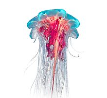 Jellyfish by pukka-