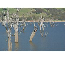 Drowned trees. Photographic Print