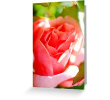 Cottage Garden Rose Greeting Card