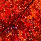 Brilliant Red Autumn Under the Maple Tree by Georgia Mizuleva