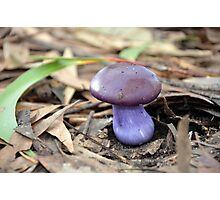 Cute purple mushroom Photographic Print