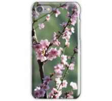 Cherry blossoms in soft afternoon light iPhone Case/Skin