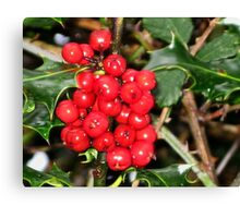 Here's Holly Where's Ivy Canvas Print