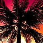 Miami Beach Palm by Eyecbeauty