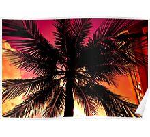 Miami Beach Palm Poster