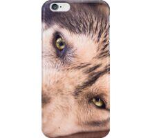Shadow the husky malamute cross iPhone Case/Skin