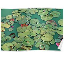 Abstract Waterlily pads Poster