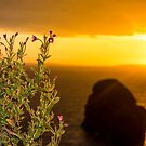 virgin rock and wild flowers sunset by morrbyte