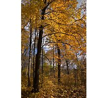 Golden Leaves and Dark Branches - Autumn in the Forest Photographic Print