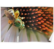 Green Bee Macro Poster