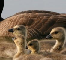 Mother Goose and Her Goslings  Sticker