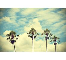 Retro summer palm trees Photographic Print