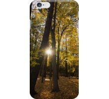 Sun Spotting Autumn - a Peaceful Forest in the Fall iPhone Case/Skin