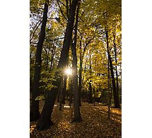 Sun Spotting Autumn - a Peaceful Forest in the Fall Photographic Print