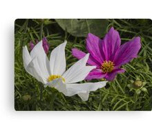 flower in the garden Canvas Print