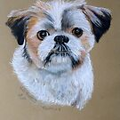 """TRUFFLES"" Shih Tzu. by Woodie"
