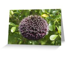 flower in the garden Greeting Card