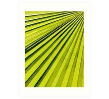Green Palm Frond Art Print